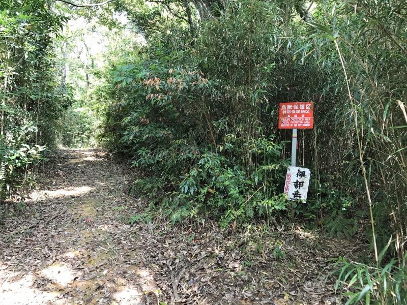 伊部岳への道