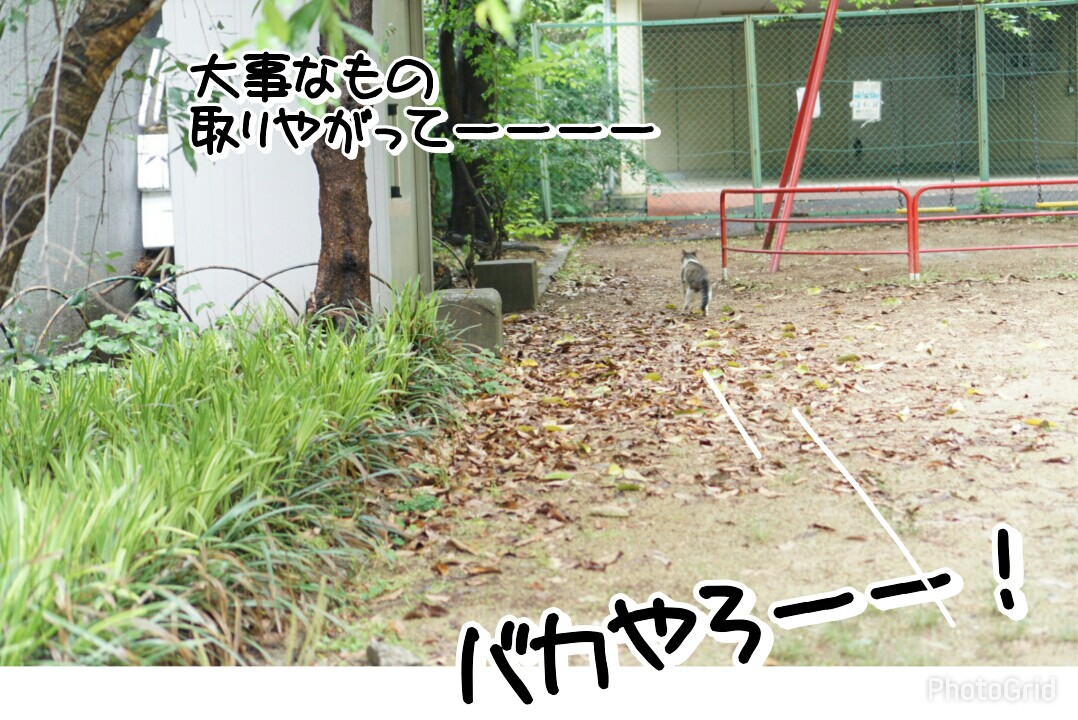 20170613002711a0c.jpg