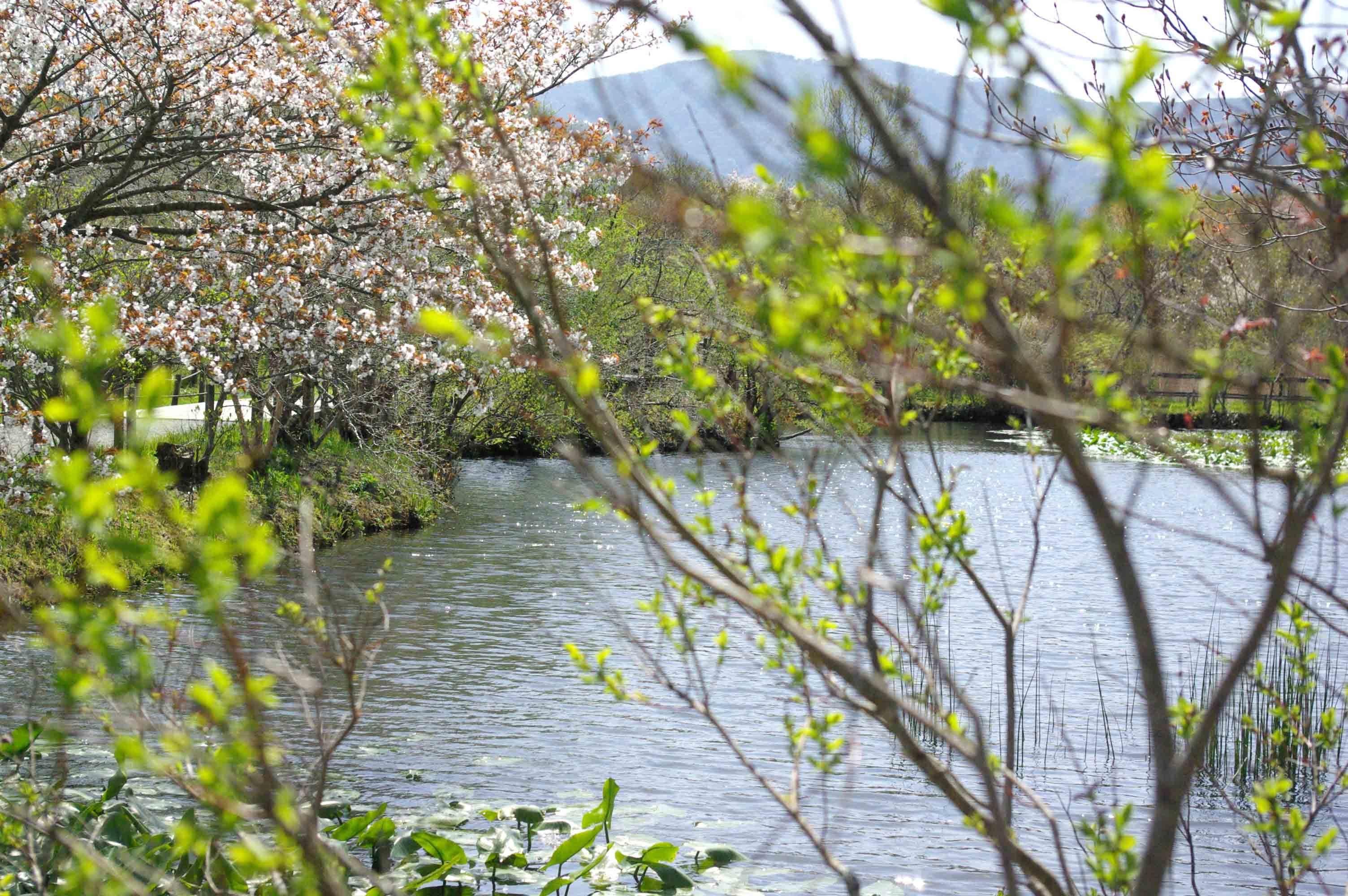 水辺の草木