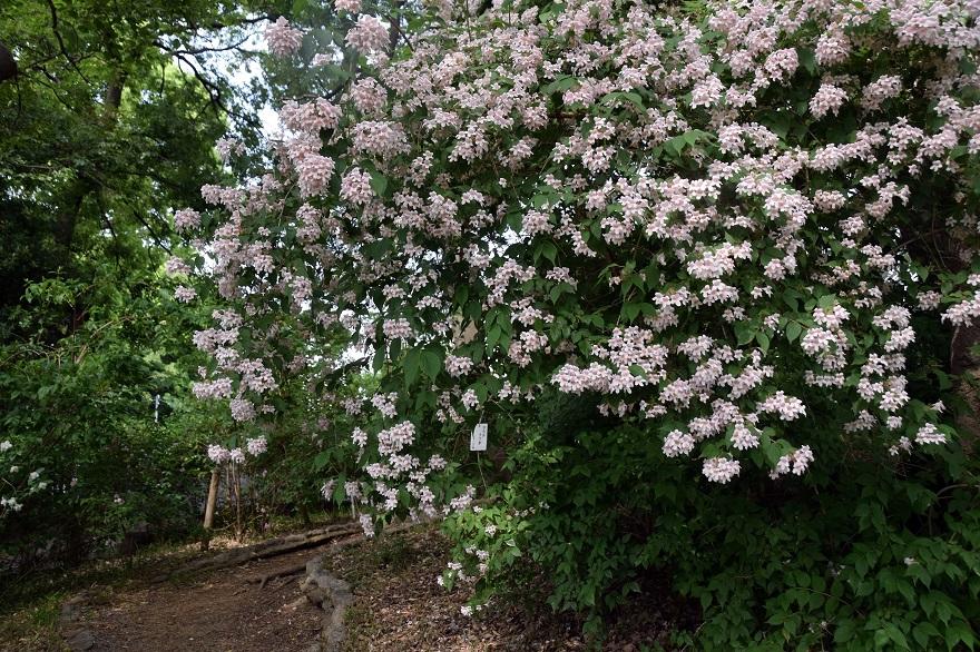 卯の花苑 (1)