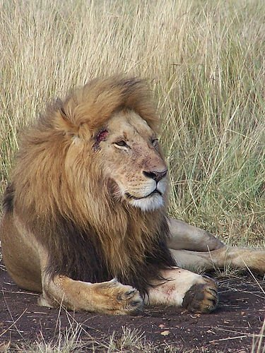 kenya_safari_wildlife_38061_l.jpg