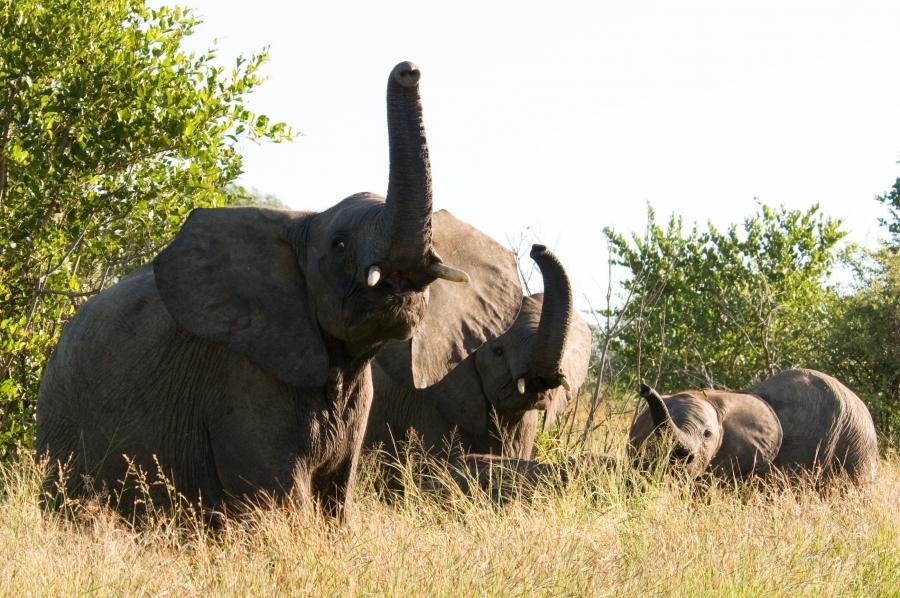 kruger-southafrica-elephant-1664525-h.jpg