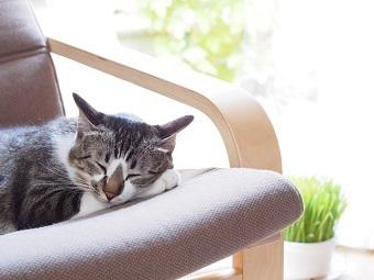 猫が寝る2