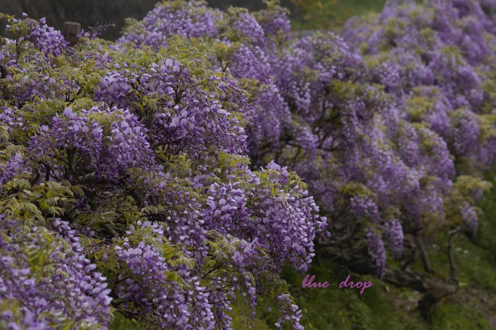 薄紫色の空間
