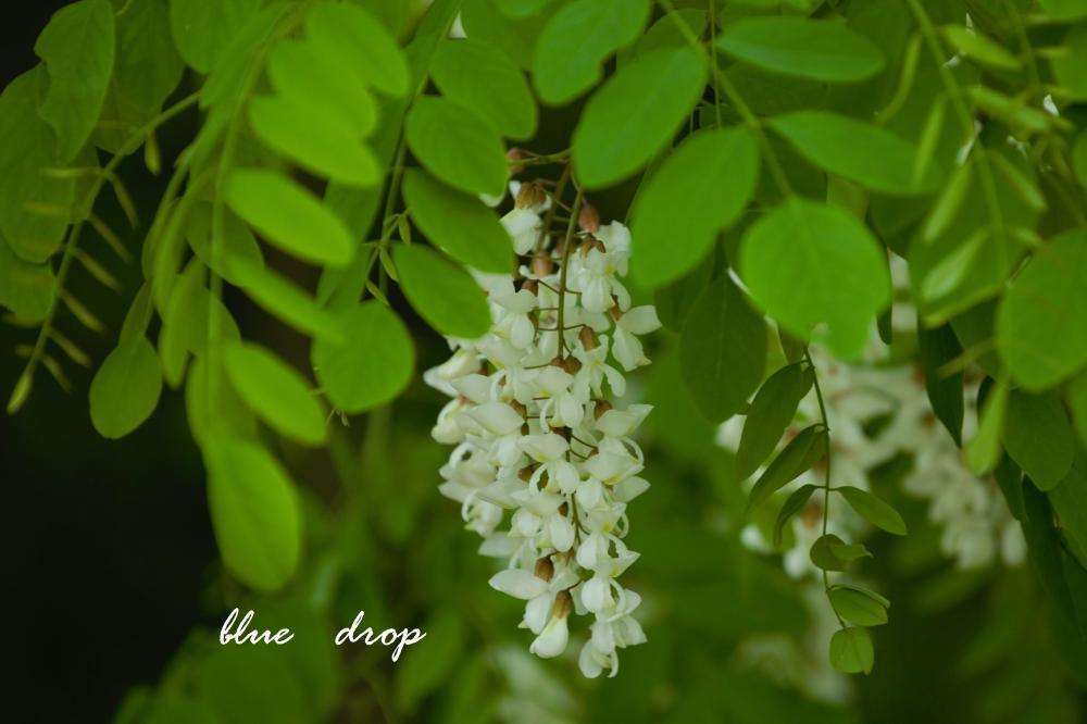甘く香り立つ花