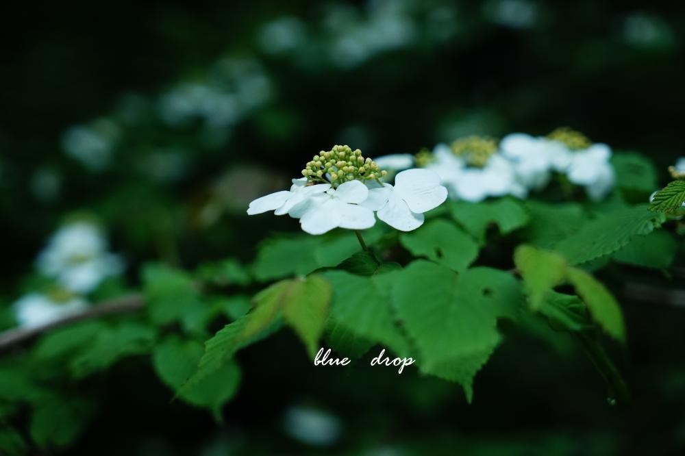 白花、浮かぶ