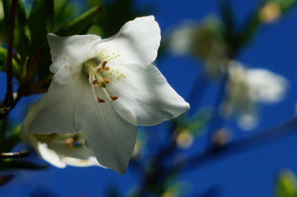 青空に咲く*