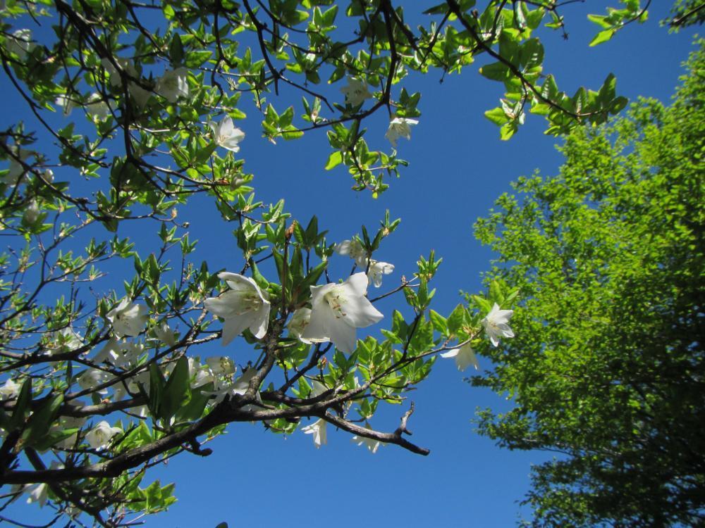 白花と新緑*