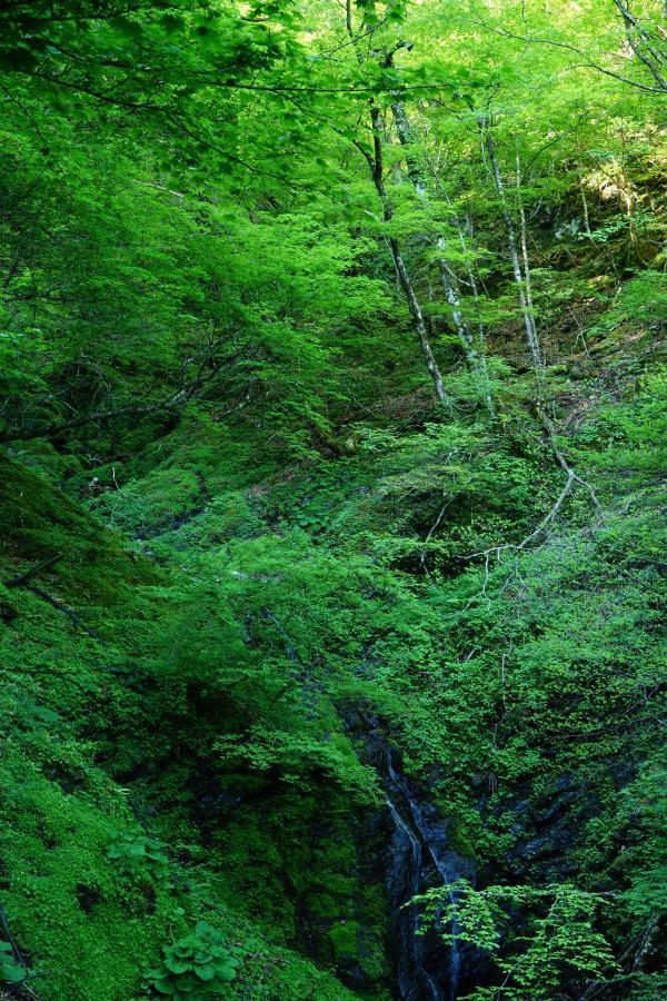 新緑と渓流*