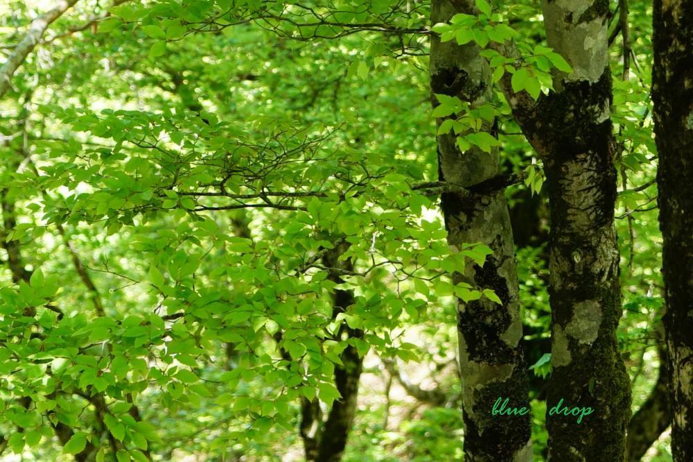 緑色のささやき*