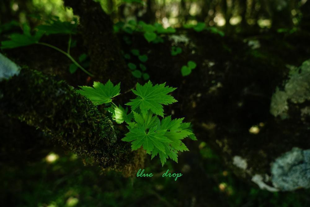 木漏れ日の森*