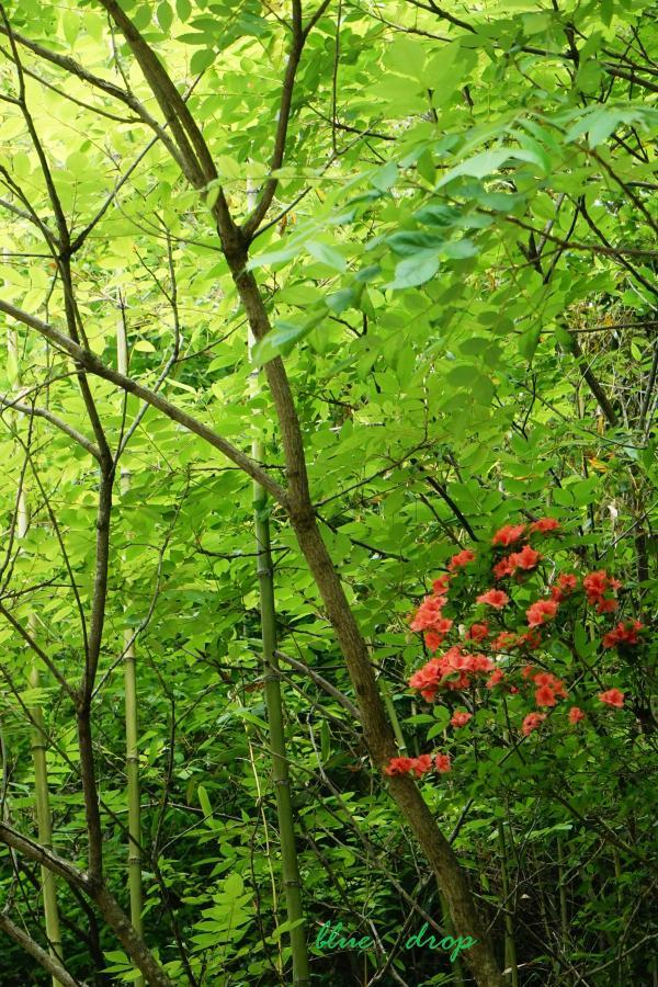 赤い花と緑の森
