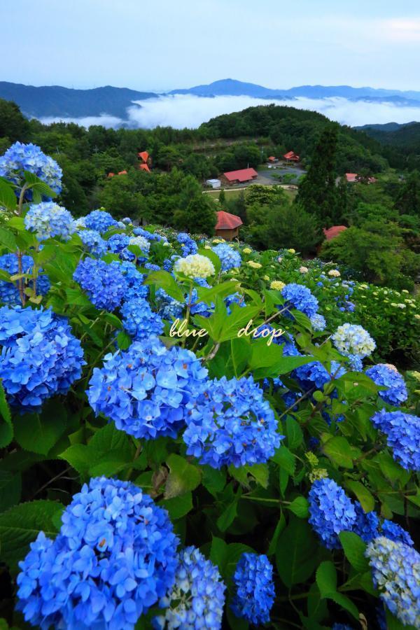 紫陽花の咲く丘