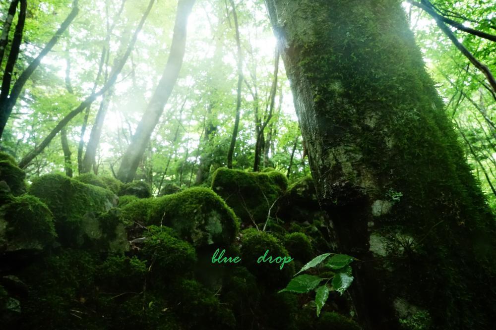 光が降る森