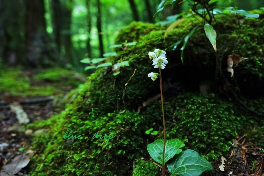 森の中の白い花