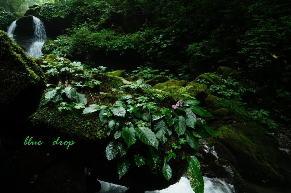 花咲く渓流*