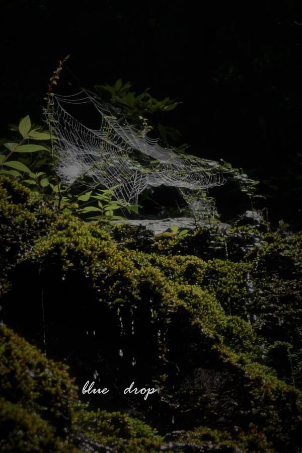 蜘蛛の糸*