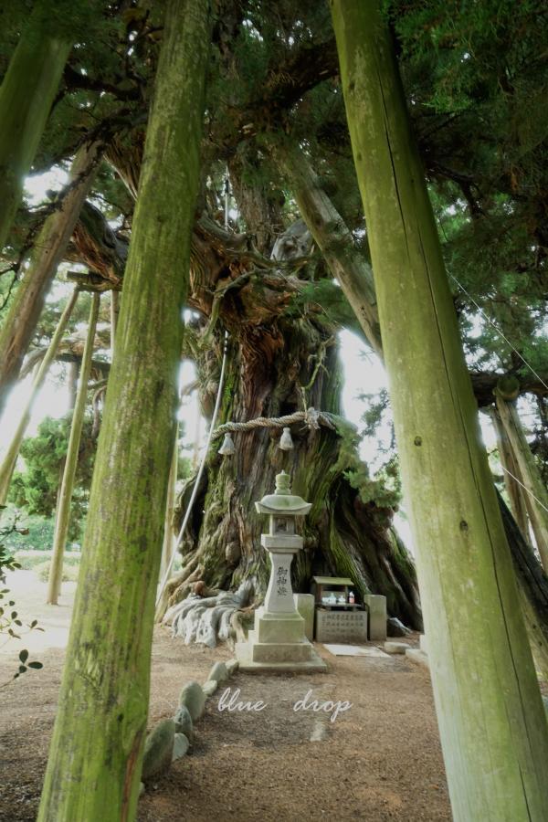 崇める樹*