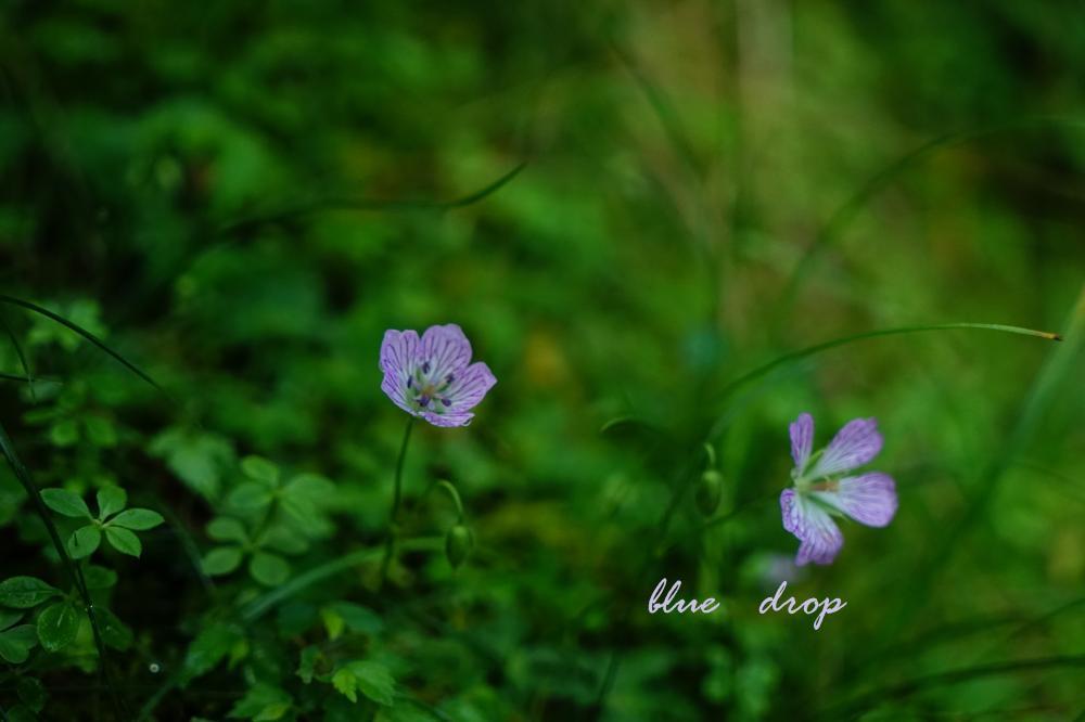 可愛く咲く