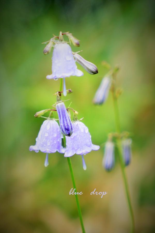 鈴鳴りの花