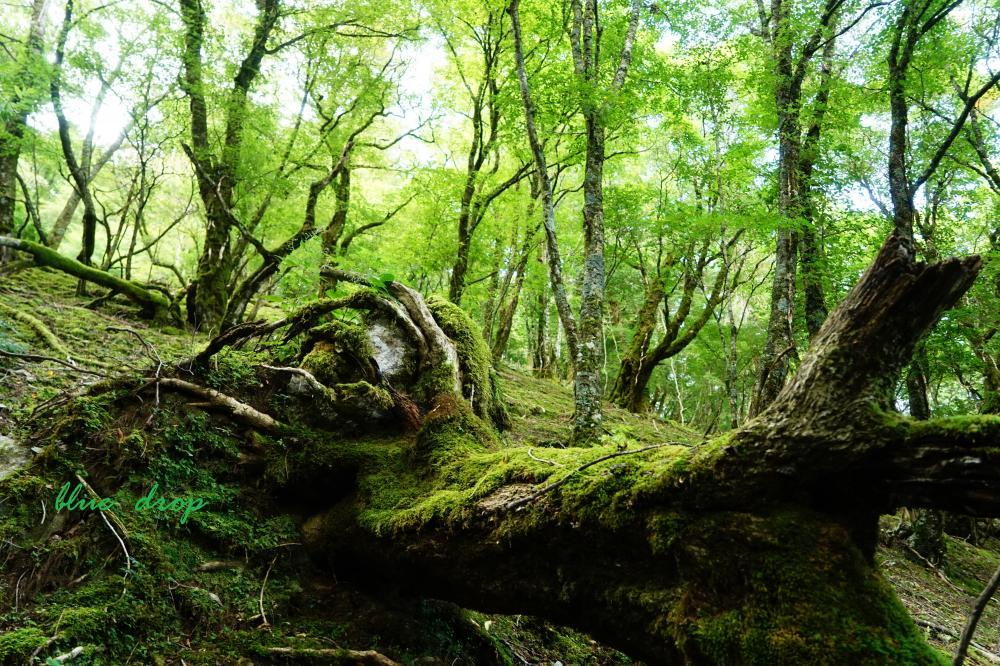 岩を抱く樹