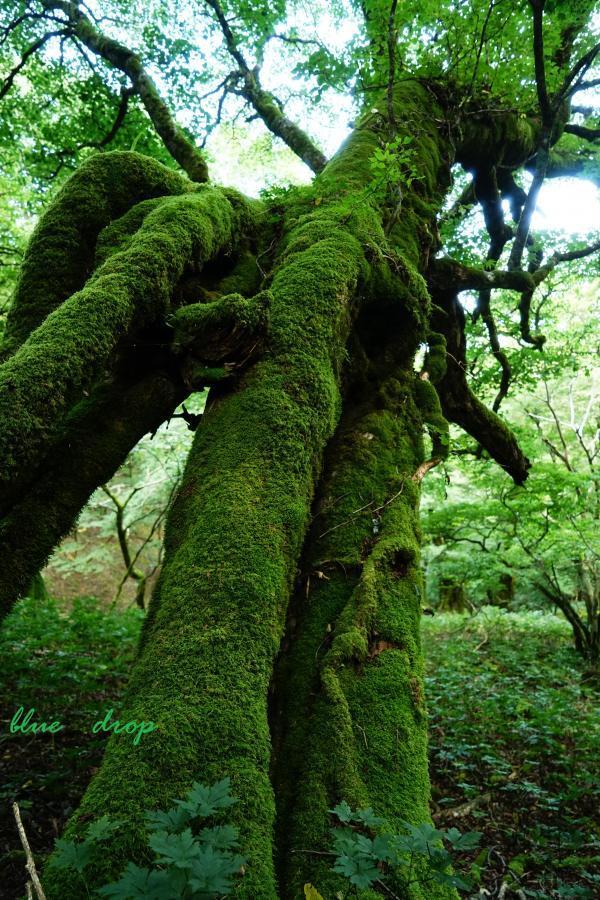歩き出す樹