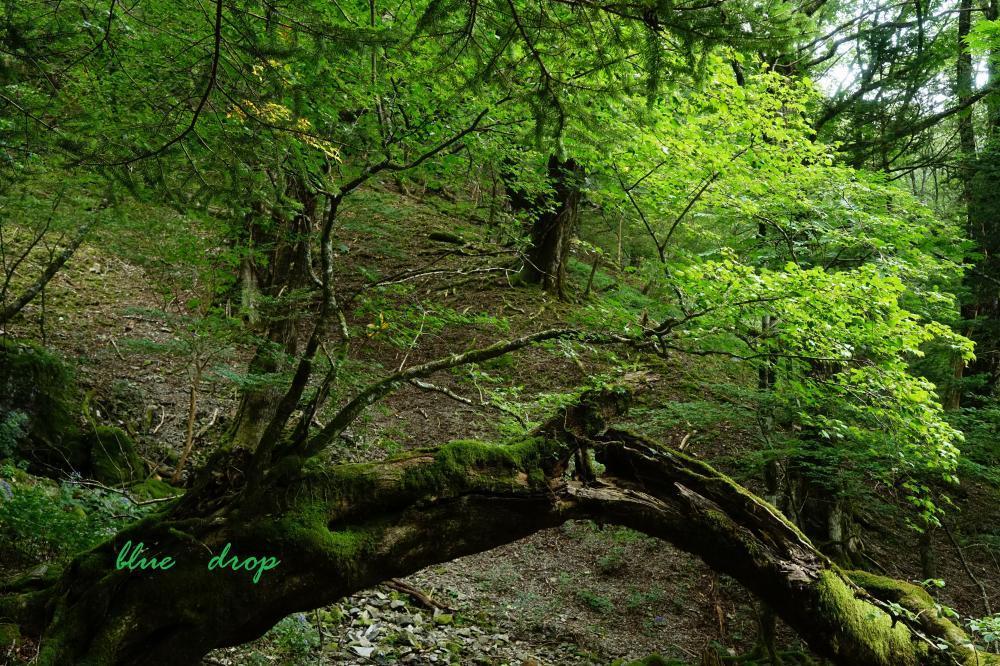 苔むす倒木*