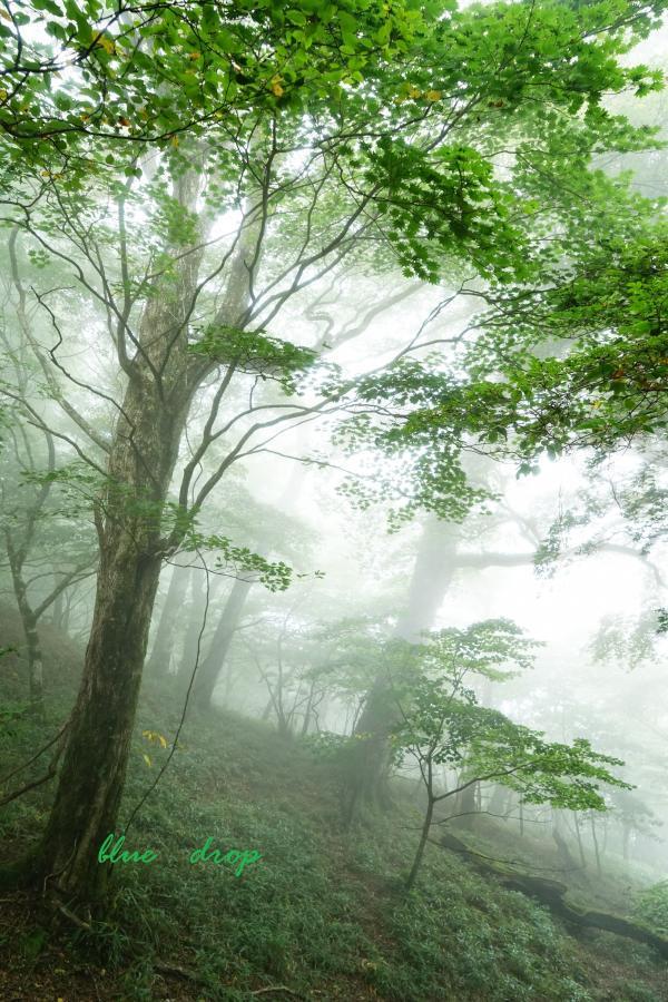 美しい森*