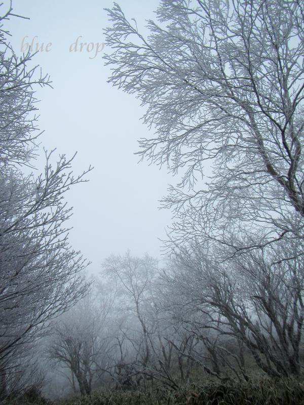 霧氷の森*