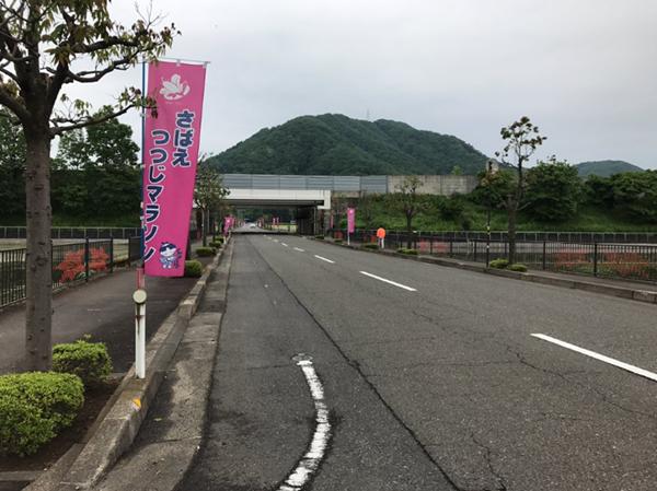 鯖江つつじ39-2
