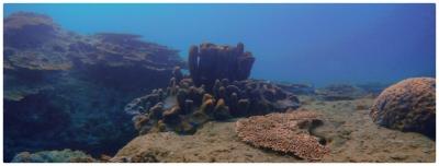 竜串サンゴ礁・Tatsukushi Reef