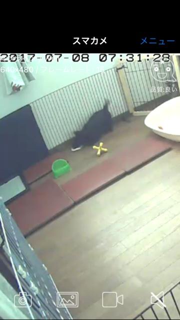 dog906