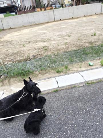 dog909