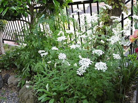 gardening330