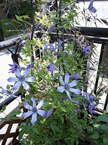 gardening334