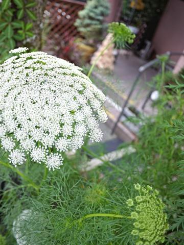 gardening337