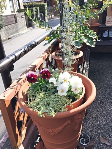 gardening352