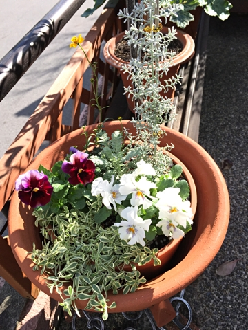 gardening353