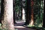 最乗寺杉の並木