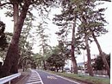 大磯松並木