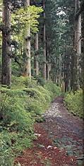 箱根杉並木の道