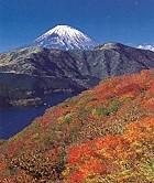 箱根山から富士山秋
