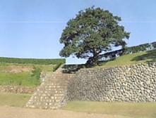 横須賀城跡玉石垣