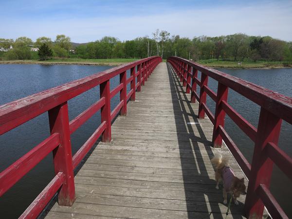 皆楽公園 赤い橋