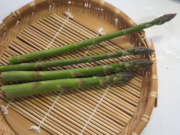 家庭菜園 アスパラガス 初収穫