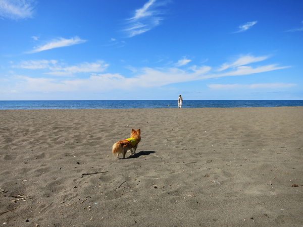 あそびーち石狩 海を眺める茶太郎