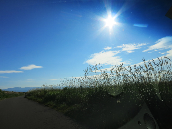 あそびーち石狩 ススキの道
