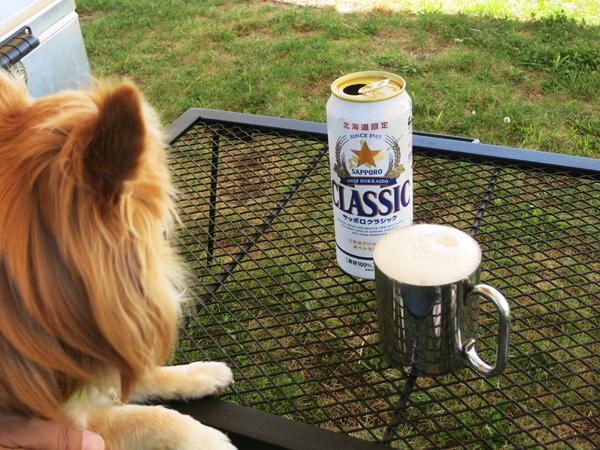 ビールで乾杯 茶太郎