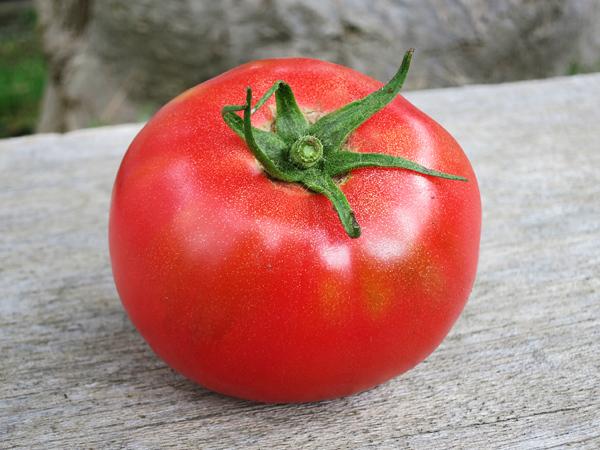 2017 家庭菜園 大玉トマト 最高傑作