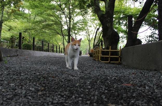 yuuki.jpg